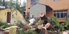 Santos registra rajadas de ventos de 124 km/h e queda de árvores