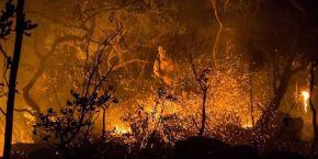 Menos de 24 horas após reunião da Cúpula do Clima, Bolsonaro corta verba para meio ambiente