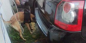 Cão de faro do 2º Baep localiza mais 2 kg de maconha em Land Rover em São Vicente