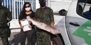 Tubarão ameaçado de extinção é encontrado dentro de freezer em São Sebastião