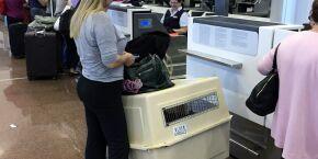 EUA proíbem entrada de cães no país a partir do dia 14