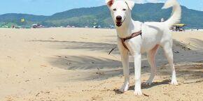 Câmara aprova circulação de cães na faixa de areia de Santos