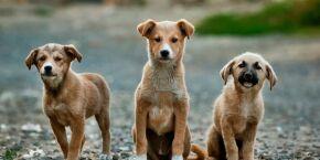Nova lei proíbe sacrifício de animais em zoonoses