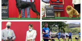 Kennel Clube de São Paulo realiza a maior exposição de cães do ano