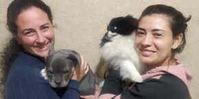 Cães roubados por trio armado em Bertioga são recuperados