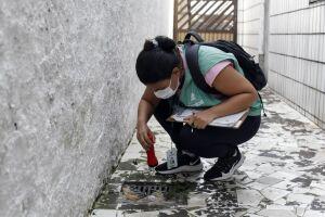 Os nove mutirões realizados este ano em Santos eliminaram 855 focos com larvas do Aedes