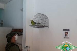 Papagaio está com dono de bar há mais de 30 anos em Itanhaém