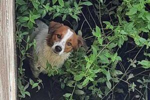 Cachorro estava dentro do canal da Avenida Atlântica, próximo à Avenida Dom Pedro I.