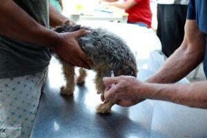 Em Santos, não serão imunizados animais que chegarem soltos