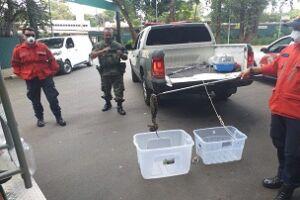 O munícipe que encontrar algum animal silvestre deve acionar a Guarda Civil Municipal (GCM) pelo número de emergência 153