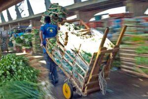 Dados revelados pela própria CEAGESP demonstram que na própria companhia vão para o lixo cerca de 150 toneladas de alimentos por dia.
