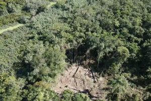 Desmatamento em área de Itanhaém foi flagrado com ajuda de drone