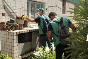 O Aedes transmite dengue, chikungunya, zika vírus e febre amarela urbana