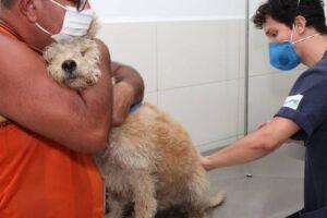 A ação é promovida semanalmente em um bairro da Cidade pela Coordenadoria de Defesa da Vida Animal (Codevida).