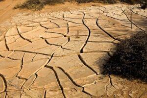Sem raízes profundas, o solo não retém umidade