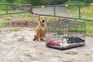 Semblante de tristeza do cão fez muitos internautas chorarem.
