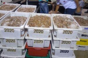 Operação resultou na apreensão de grande quantidade de camarão