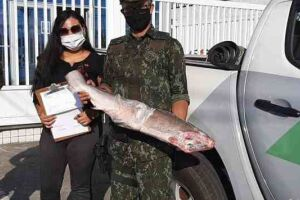 Policias ambientais que realizavam patrulhamento na região de São Sebastião, litoral norte de São Paulo, descobriram um tubarão martelo, ameaçado de extinção, congelado em um freezer.