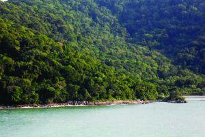 Parque Estadual Xixová-Japuí, Mata Atlântica com as seguintes formações: Floresta Ombrófila Densa Submontana, Floresta Ombrófila de Terras Baixas , Formação arbórea/arbustiva-herbácea sobre sedimentos marinhos recentes