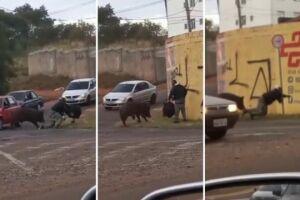 Porco derruba e morde motoboy durante entrega