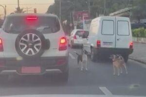Vídeo flagrou momento em que cães foram abandonados em Guarujá