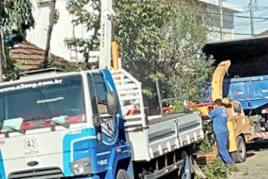 Em menos de 30 minutos, uma árvore de 30 anos arrancada em São Vicente. Família inconformada