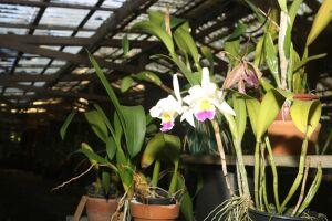 Ao todo são aproximadamente 3.500 exemplares de cerca de 60 espécies nativas e exóticas desta planta cheia de charme