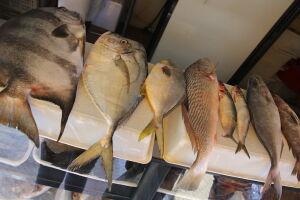 A doença é causada por uma toxina que pode ser encontrada em peixes e crustáceos