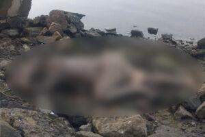 Corpo estava com as mãos amarradas e foi encontrado às margens do rio que atravessa o bairro Ilha Caraguatá, em Cubatão