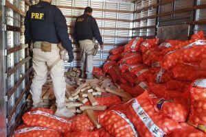 Forte odor de maconha chamou a atenção dos policiais, que decidiram revirar a carga