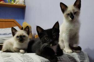 Gatos estarão para adoção em Bertioga em retorno da feira presencial