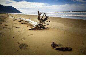 ação conjunta de limpeza marítima nas praias da Baixada Santista e Litoral Sul, o'Navegar é Preservar', entre os dias 17 e 19 de setembro