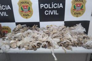 As investigações permanecem para identificação dos responsáveis pelo tráfico na Cidade
