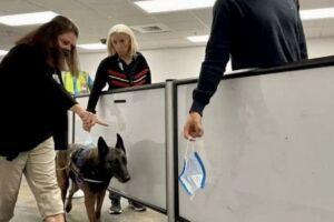 Miami usará cães no aeroporto para detectar se turistas estão com Covid-19