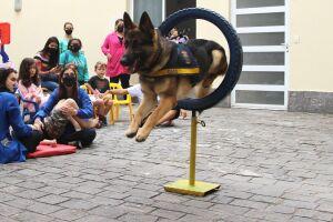 O agente k-9 Logan se apresentou no circuito agility (esporte para cães) e showdog para a alegria das crianças