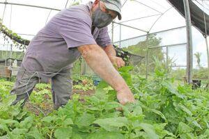 Legumes e verduras sem agrotóxicos se tornaram em exemplo de alimentos orgânicos cultivados por casal em Peruíbe