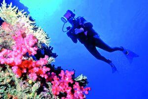Cercada de muitos recifes e corais, as ilhas Fiji são banhadas pelo Oceano Pacífico que oferece maravilhoso espetáculo sob suas águas
