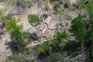 Ministro Sarney Filho disse que o desmatamento na Amazônia está em queda neste ano