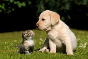 Mudanças de estação requerem maior cuidado com os cães e gatos