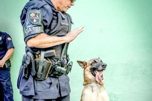 São quatro cachorros da raça pastor belga marinois que passaram seis meses em treinamento e, agora, já estão nas ruas