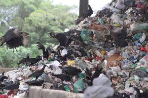 91 municípios paulistas não fazem coleta seletiva de lixo
