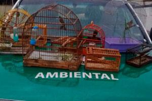 As aves foram soltas no Parque Municipal Piaçabuçu