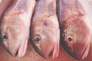 Pesca do bacalhau no Alasca caiu aos níveis mais baixos em décadas