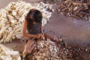 A agricultura era a principal atividade das crianças trabalhadoras de 5 a 13 anos