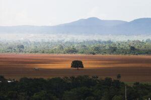 O governo da Noruega vai reduzir em 60% o pagamento anual que faz ao Brasil para proteção da Floresta Amazônica