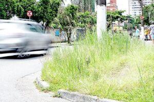 O Diário esteve presente em diversos bairros do Município para constatar as reclamações e percebeu uma maior evidência da falta de capinação nos bairros Marapé, Rádio Clube, Encruzilhada, Vila Mathias e Macuco