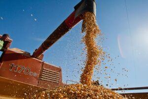ntre os cinco principais produtos, três devem apresentar quedas na produção para a próxima safra: arroz em casca (-8,0%), milho em grão (-15,9%) e soja em grão (-5,9%)