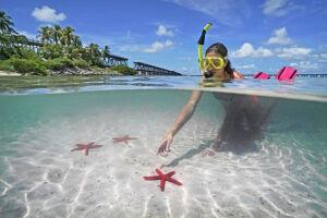 Key West está repleto de peixes tropicais e formações de corais coloridas