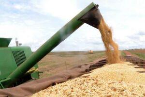 O ano de 2017 está sendo considerado excepcional para a agricultura brasileira