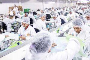 Mal acabou o Natal e o setor de chocolate já está se preparado para a Páscoa, a data mais importante do ano para essa indústria